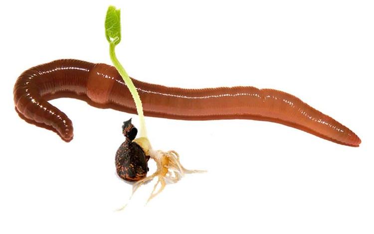 ew-seedling11